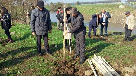 YAP-ın 25-ci ildönümü münasibətilə Masallı rayonunda ağacəkmə aksiyası keçirilib