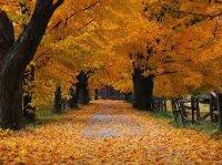 Payız şeiri