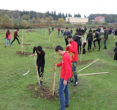 Masallıda ağacəkmə kampaniyası