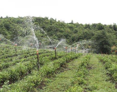 Masallıda yaşayış məntəqələrinin və əkin sahələrinin su təminatı yaxşılaşır