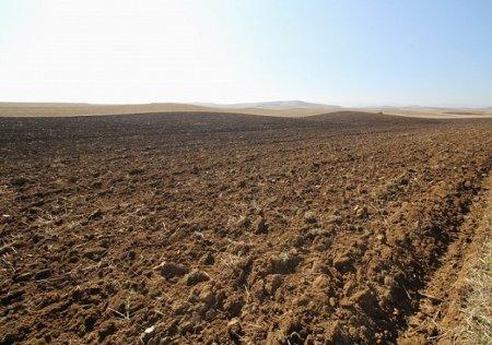MASALLI - Çaxırlıda 1200 hektar sahədə əkin aparılacaq